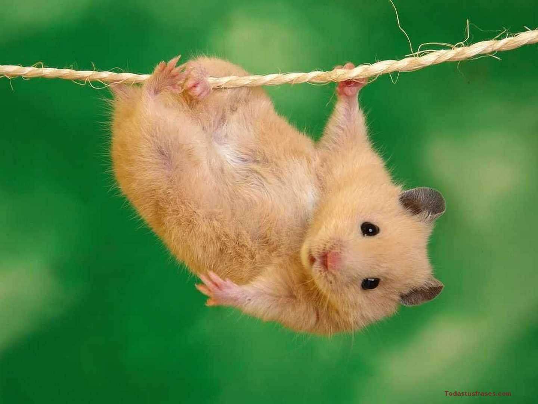 Fondos De Pantalla De Animales Bebes: Fondos De Pantalla De Animales Tiernos