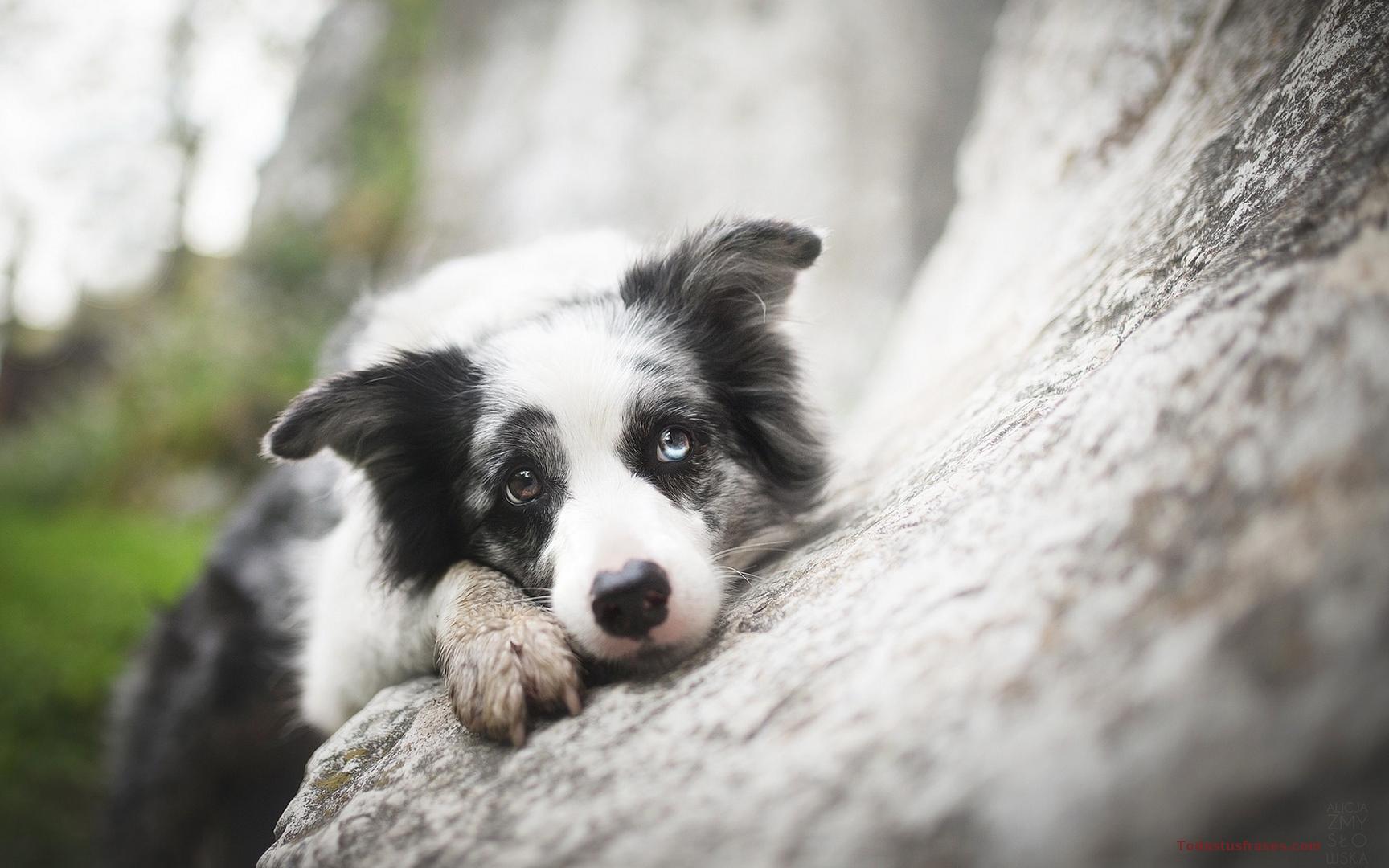 Fondos De Animales Animados: Fondos De Pantalla De Animales Graciosos Y Divertidos