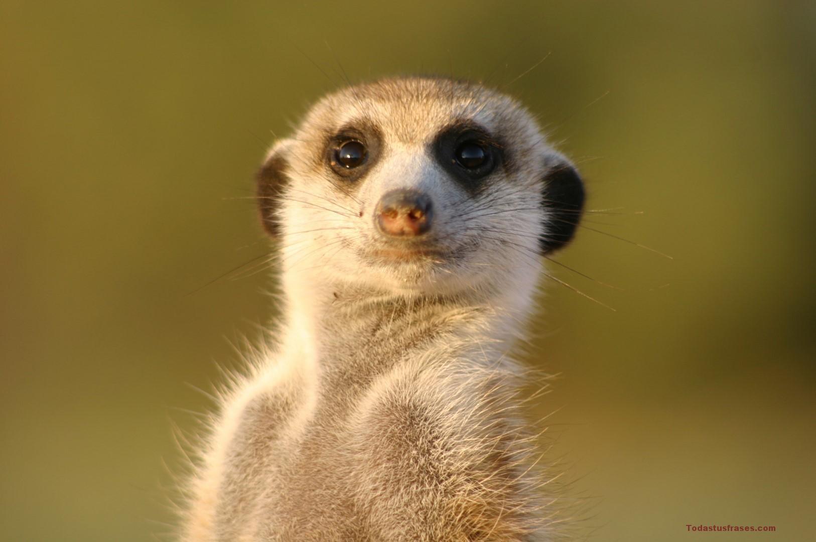 Fotos De Animales Salvajes Para Fondo De Pantalla: Fondos De Pantalla De Animales Graciosos Y Divertidos