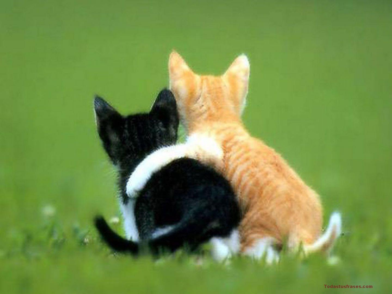 Fondos De Pantalla De Animales Bebes: Fondos De Pantalla De Animales Graciosos Y Divertidos