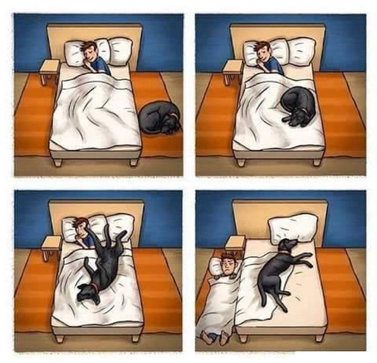 Chistes gráficos de animales dormir